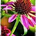 Flower 70f by Richard Xuereb