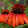 Flowers 729 by Joyce StJames
