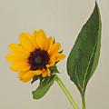 Flower 8-11 by Skip Willits
