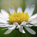 Flower by Alex Simon