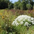 Flower Along The Trail  by Jason Nicholas