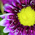 Flower And Droplets by Dianne Phelps