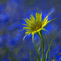 Flower And Flax by Heather Coen