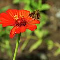 Flower And Friend by Arthur Dodd