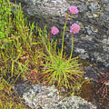Flower And Rock by Tom Singleton