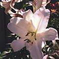 Flower by Andreea Balan