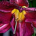 Flower Art by Lynn Reid