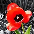 Flower As Art by Karl Rose