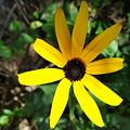 Flower by Ashley Mollett