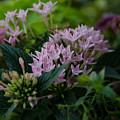 Flower Basket by Dale Powell