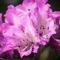 Flower Beauty by Lisa Bell
