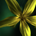 Flower  by Becs Craven Photography