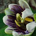 Flower Bloom by Digital Art Cafe