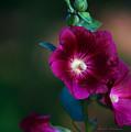 Flower Bloom by Edward Peterson