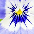 Flower Blossom 1 by Jijo George