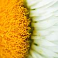 Flower Blossom 2 by Jijo George