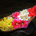 Flower Boat by Daniel Murphy
