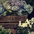 Flower Box by JAMART Photography