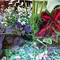 Flower Box by John Vandebrooke