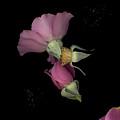 Flower Box Purple Cut by Heather Kirk