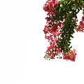 Flower Branch by Amanda Chase