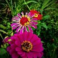 Flower Burst by Jessica Stewart