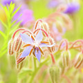 Flower Carpet by Gerlya Sunshine