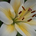 Flower Close Up 1 by Anita Burgermeister
