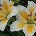 Flower Close Up 2 by Anita Burgermeister