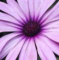 Flower Close Up 2 by Jesus Nicolas Castanon