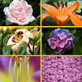 Flower Collage 1 by Imagery-at- Work