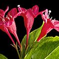Flower Composite Trio Horizontal by Donald  Erickson