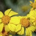 Flower by Dan McManus
