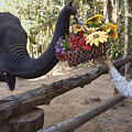 Flower Delivery By Trunk by Sally Weigand