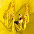 Flower Detail by M Valeriano