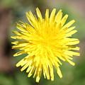 Flower by Didier Belrose