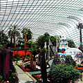 Flower Dome 3 by Ron Kandt