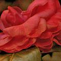Flower Dusting by Larry Jones