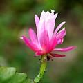 Flower Edition by Bernd Hau