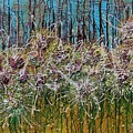 Flower Energy by Mihai Banutoiu