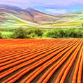 Flower Field Near Los Osos by Dominic Piperata
