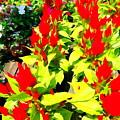 Flower Flames by Ed Weidman