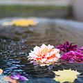 Flower Floats by Daniel Frigo