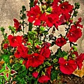 Flower Garden 11 by Kristalin Davis