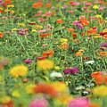 Flower Garden by Bill Cannon