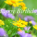 Flower Garden Birthday Card by Carol Groenen