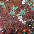 Flower Garden In The Rust by D Hackett