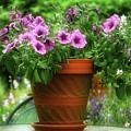Flower Garden Pot by Artie Rawls
