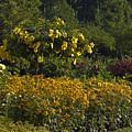 Flower Garden by Sally Weigand