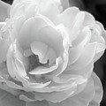 Flower Ghost by Josephine Z Nyounai